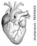 human heart   vintage... | Shutterstock .eps vector #98545643