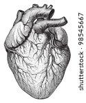 Human Heart   Vintage...
