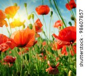 poppies field in rays sun | Shutterstock . vector #98607857
