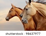 Purebred Horses Closeup In...
