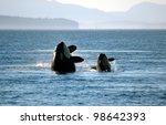 A Mother And Calf Orca Breach...