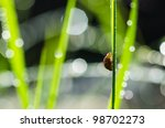 ladybug ladybug and sunlight bokeh in the green nature or in the garden - stock photo