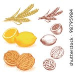 Grain, lemons, walnuts - stock vector