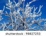 closeup of branches of a tree... | Shutterstock . vector #98827253
