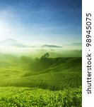 Tea Farm landscape in Cameron Highland, Malaysia. - stock photo