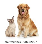 Stock photo cat and dog together on a white background 98962007