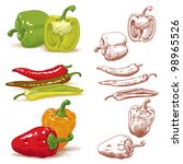 Set of various peppers. Vector illustration. - stock vector