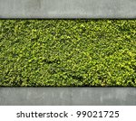 Cement wall and green leaf for background - stock photo