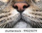 cat nose - stock photo