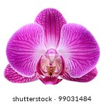 orchid on the white background - stock photo
