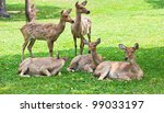 beautiful deer | Shutterstock . vector #99033197