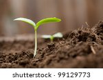 sprout growing out of dirt in a ... | Shutterstock . vector #99129773