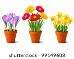 Stock vector spring colorful flowers in pots vector 99149603