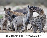 Hyena Brawl - stock photo