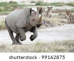 Black Rhino Escape - stock photo