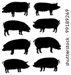 Collection of silhouettes of pigs - stock vector