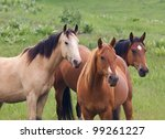 Three Horses And Green Meadow