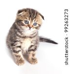 Stock photo funny striped little kitten isolated on white background 99263273