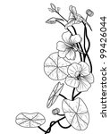 vector illustration of the nasturtium in black and white colors - stock vector