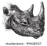 Постер, плакат: Black Rhinoceros or hook lipped