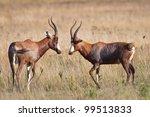 Pair Of Blesbok On Grassy Fiel...