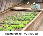Vegetable in the greenhouse - stock photo