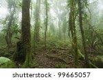 mossy  humid australian rain... | Shutterstock . vector #99665057