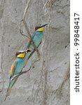 couple of merops apiaster and... | Shutterstock . vector #99848417