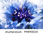 Blue flower - stock photo