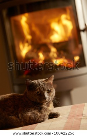close up of cat relaxing by