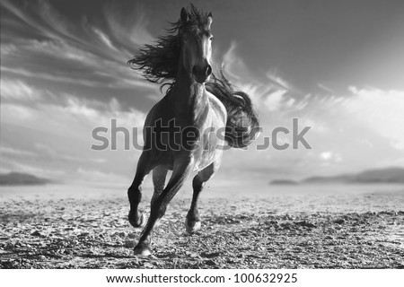 monochrome photo running horse