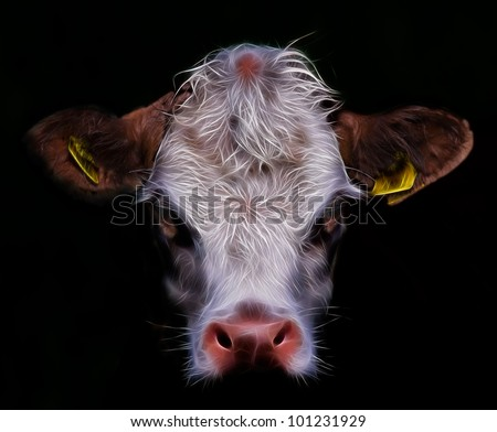 daisy a cow cow face