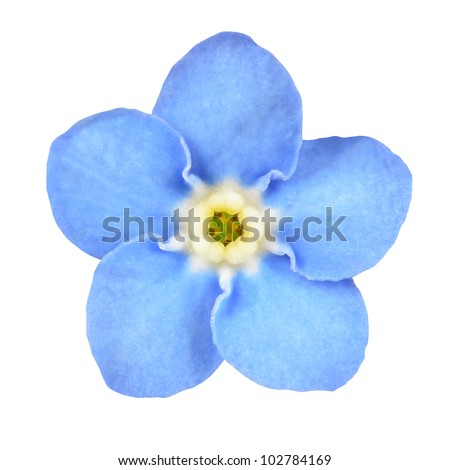 forget me not light blue flower