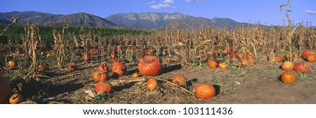 pumpkin patch  california