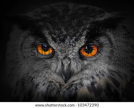 the evil eyes   eagle owl