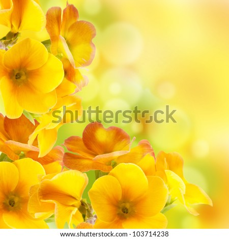 yellow flowers on a white