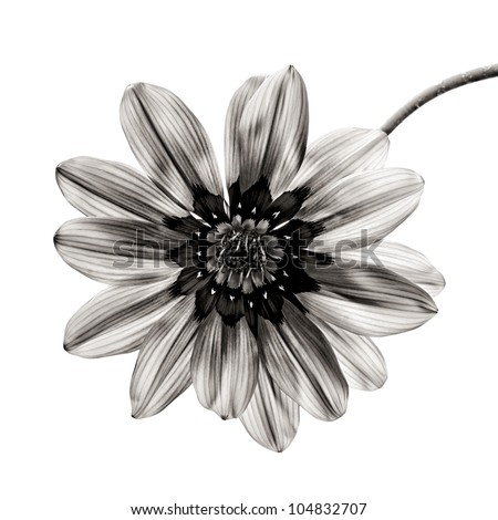 flower in black and white on