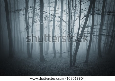 dark landscape with forest
