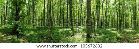 green forest landscape with