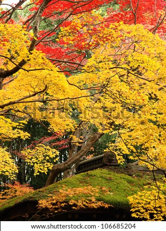 autumn at kotoin sub temple in