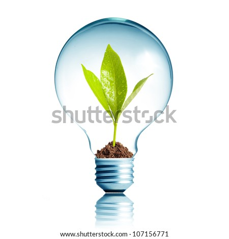 light bulb with soil and green