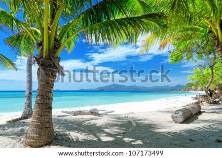 green tree on a white sand