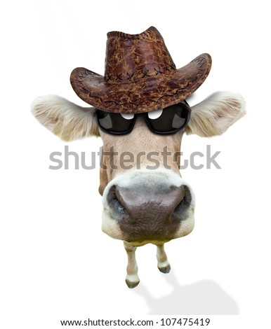 funny cow portrait  isolated on