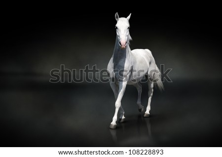 white horse isolated on black