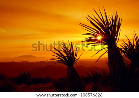 sunset in joshua tree national