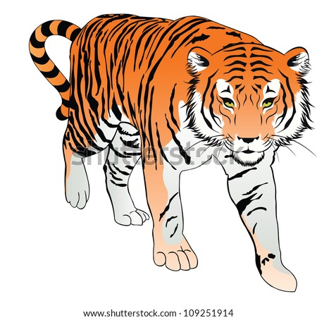 tiger  orange  black and white