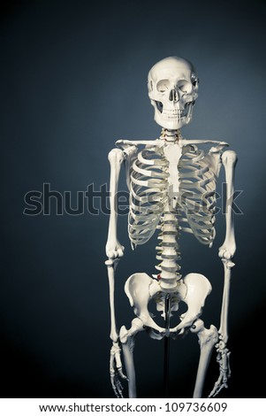 medical skeleton model with