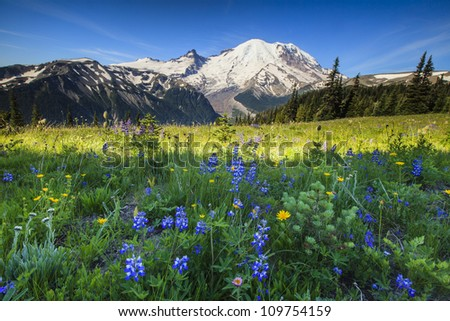 mt rainier with wildflowers