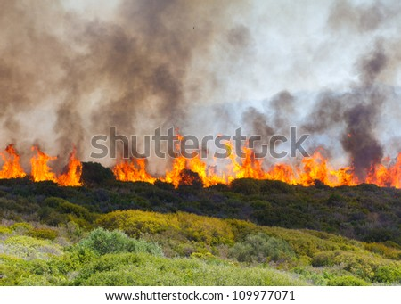 raging bush fire across the