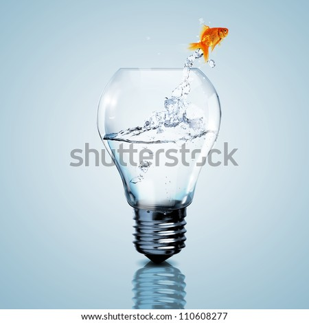 gold fish in water inside an
